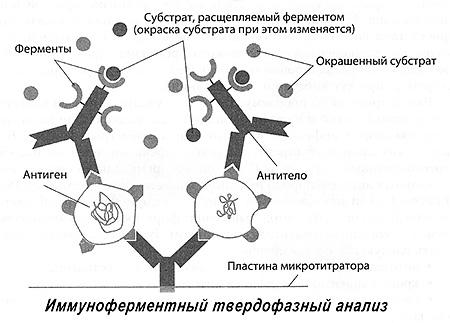 образованием антител к